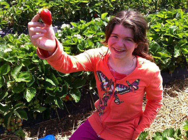 Miam les fraises de gals classe hubert cp de neuch tel - Comment cueillir des fraises ...